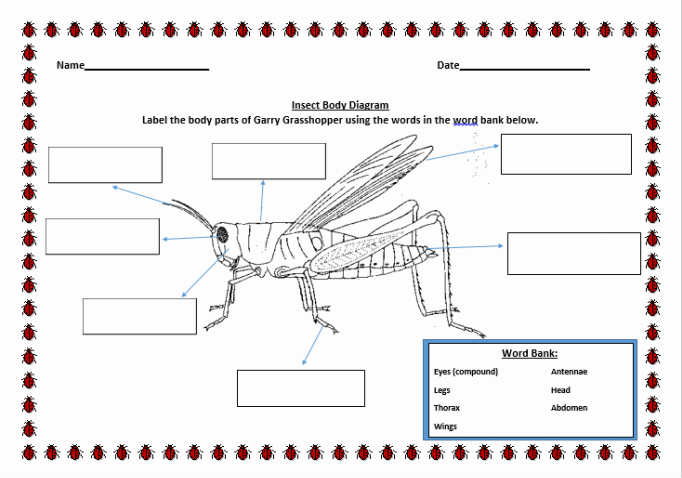 major anatomical features of insects worksheet Anatomical features of insects worksheet for more classes visit wwwsnaptutorialcom bio 335 week 1 individual assignment major anatomical features of insects.